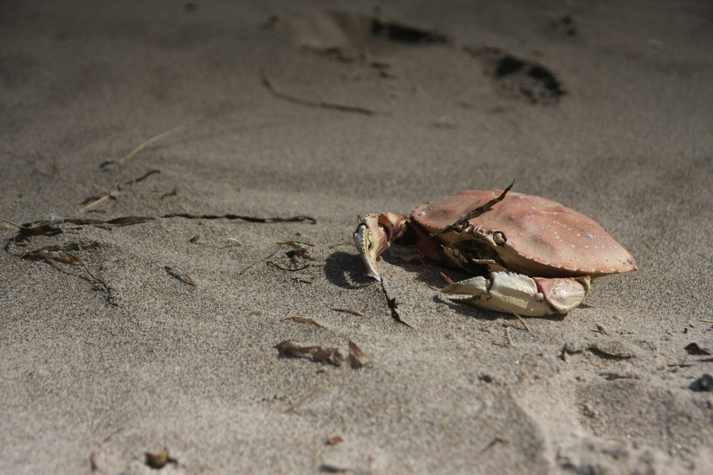 I'm a crab, and I've molted, because no one grows without giving at least a little of themselves away.