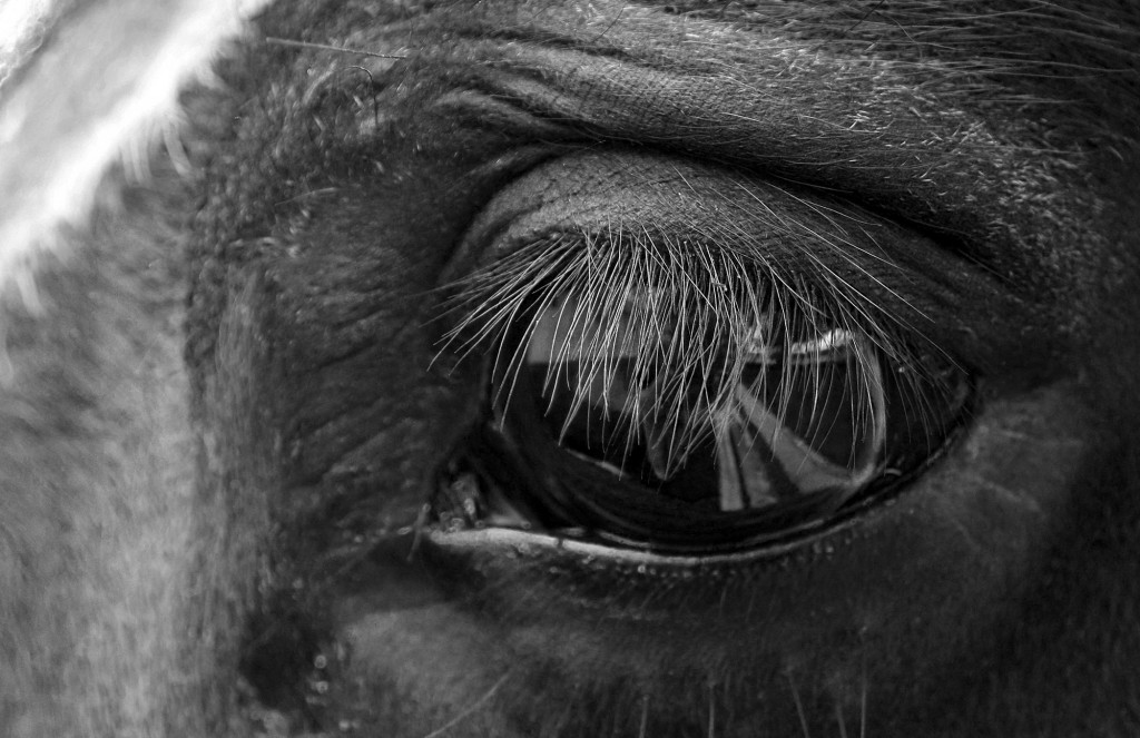 Horse press-on lashes