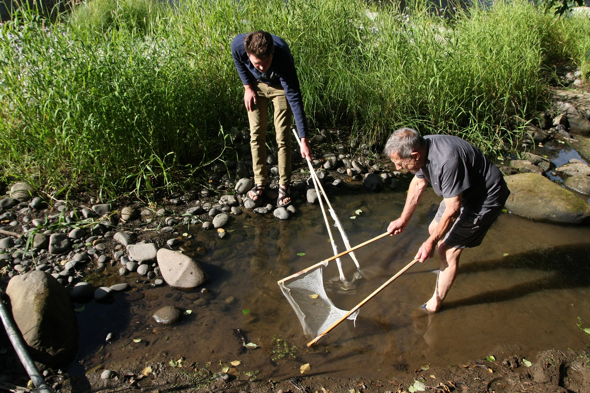 Rescuing fingerlings along the Siletz